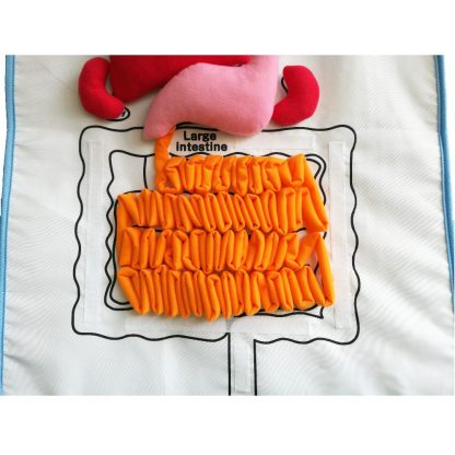 Educational Insights Toys for Children Anatomy Apron Human Body Organs Awareness Preschool Science Home school Teaching Aids 4